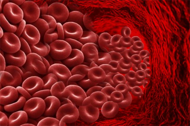 Red_Blood_Cells_Wide